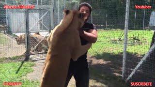 Download Reacción de esta Leona al ver a su antiguo cuidador adoptivo Video