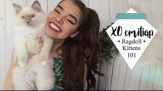 Download Everything To Know About Ragdoll Kittens   Ft. My Ragdolls Cat   xoemiliap Video
