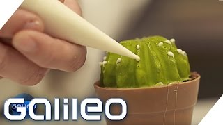 Download Dessert-Illusionen - Der essbare Kaktus | Galileo | ProSieben Video