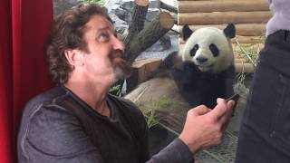 Download Gerard Butler and the Zoo Berlin Video