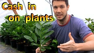 Download Make Money with Plants in Your Backyard | Rooting and Selling Cuttings Video