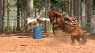 Download Como amansar um cavalo Video