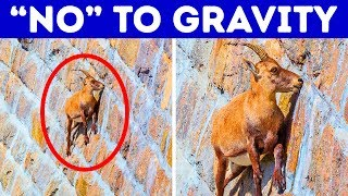 Download 17 Awesome Animals That Can Do Impossible Things Video