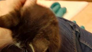 Download Elderberry - 2017-10-02 Video