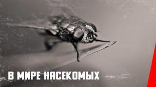 Download В мире насекомых (1936) документальный фильм Video