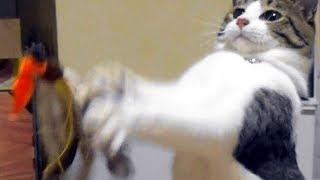 Download 暴風雨警報が出た日、2ニャンズはのんびりと寝てました【猫日記こむぎ&だいず】2017.06.21 Video