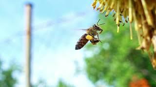 Download bee stuff Video