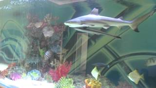 Download Huge private shark tank with fish Video