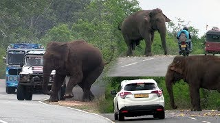 Download Big wild elephant waiting for food at the Kataragama road ! Video