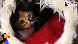 Download Kitten Trapped For TWO DAYS Saved by Determined Rescuers | The Dodo Video