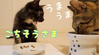 Download 食べるとは生きるということだ【子猫】 Video