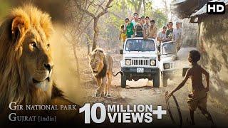 Download आखिर क्यूँ आते हे शेर इनसानीं इलांको मे ? [GIR Forest National Park India] Video