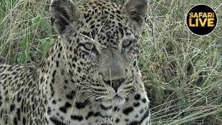 Download safariLIVE - Sunset Safari - March 22, 2019 Video