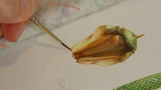 Download The Art of Botanical Illustration; A Norfolk Island Pine by Angela Lober Video