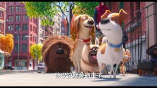 Download 【寵物當家】歡樂預告-6月29日 歡樂登場 Video