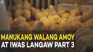 Download Manukang Walang Amoy at Iwas Langaw: Broiler Management | Agribusiness Broiler Farming Part 3 Video