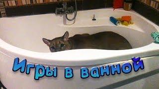 Download ПУМА ИГРАЕТ В ВАННОЙ / Особые отношения мейн-куна Мисы и кота Пусси Video