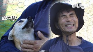 Download 견생 처음 사람 손길을 경험한 강아지의 반응 (특히 3:20ㅋㅋㅋ)ㅣ TFW A Dog Felt Warm Touch From Hooman For The First Time Video