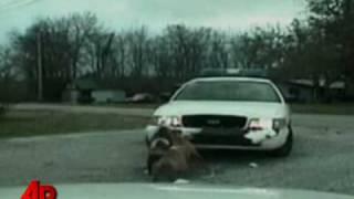 Download Raw Video: Dog Attacks Police Cruiser Video