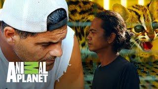 Download ¡Frank se enfrenta a un traficante de animales!   Wild Frank: En busca del dragón   Animal Planet Video