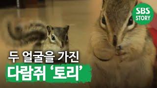 Download TV 동물농장 468회 12 Video