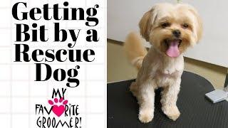 Download Forgive me I am a rescue dog Video