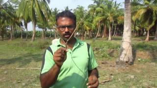 Download Ground water using neem stick - basic course - technique for water divining Video