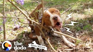 Download Pit Bull Chained to Tree Transforms Into the Happiest, Prettiest Girl | The Dodo Pittie Nation Video