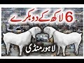 Download Lahore Bakra Mandi 2017 | Latest Bakra Video | Eid-e- Qurbani Episode 2 | Video in Urdu/Hindi Video