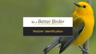 Download Be a Better Birder: Warbler Identification Video