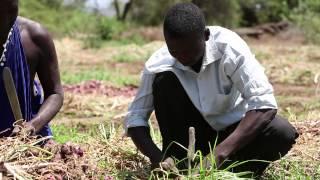Download Mansuet Mlacha - Mkulima wa vitunguu kutoka Same, Kilimanjaro Video
