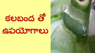 Download Best Uses Of Aloe Vera In Telugu II Latest Health Tips Video