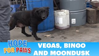 Download Right after rescuing a mom and a puppy, another call for help came in... Video