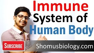 Download Innate and adaptive immunity | immune system of human body lecture Video