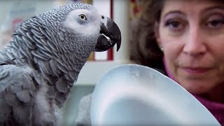 Download Parrot vs Child: The Intelligence Test | Extraordinary Animals | Earth Video