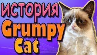 Download История сварливого (грустного) кота. Grumpy Cat Video