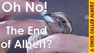 Download Oh No! The end of Albert? Video