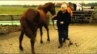 Download Eibergse redt paard van de slacht Video