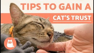 Download How to Gain the Trust of a Cat Video