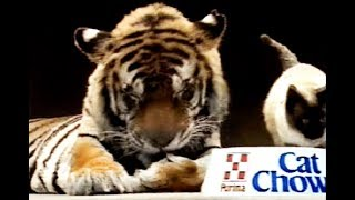 Download Anuncio Purina Cat Chow, entusiasma a cualquier gato (1988) Video