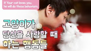 Download 고양이가 당신을 사랑할 때 하는 행동들 If Your cat loves you, he will do these behaviors. Video