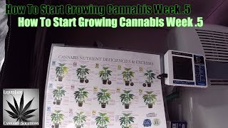 Download How To Start Growing Cannabis Week .5 Video