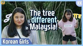 Download The tree is different in Malaysia! |Kundasang |Blimey in KK Ep.12 Video