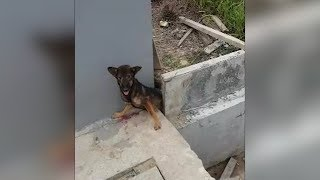 Download Man saves a trapped dog Video