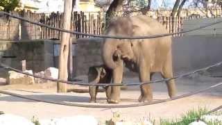 Download Budapest - Fővárosi Állatkert v.s. Nagyvárosunk Állatkertje, kint és bent :) 2013.04 - HD Video