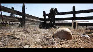 Download After Years (Post Apocalyptic Series) EPISODE ONE Video