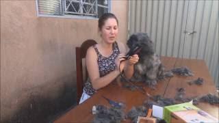 Download Tosei meu cachorro pela primeira vez. Video