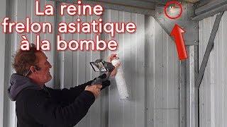 Download La reine collée à la bombe insecticide Video