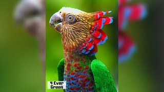 Download 10 Most Beautiful Parrots on Planet Earth Video