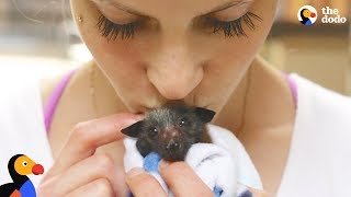 Download Woman Rescues Bats That Help Her Fight Anxiety | The Dodo Video